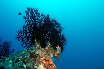 plongée sous marine, apprendre plongée, plongée mer